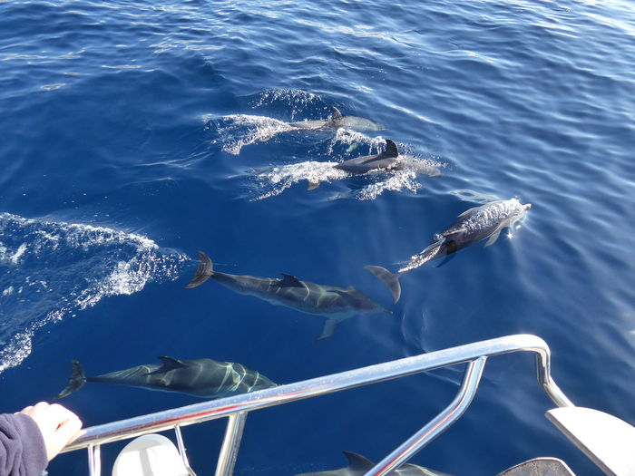 Dolphins Dolphins In The Wild Dolphins Swimming Animals In The Wild Blue Sea Sea Life Water