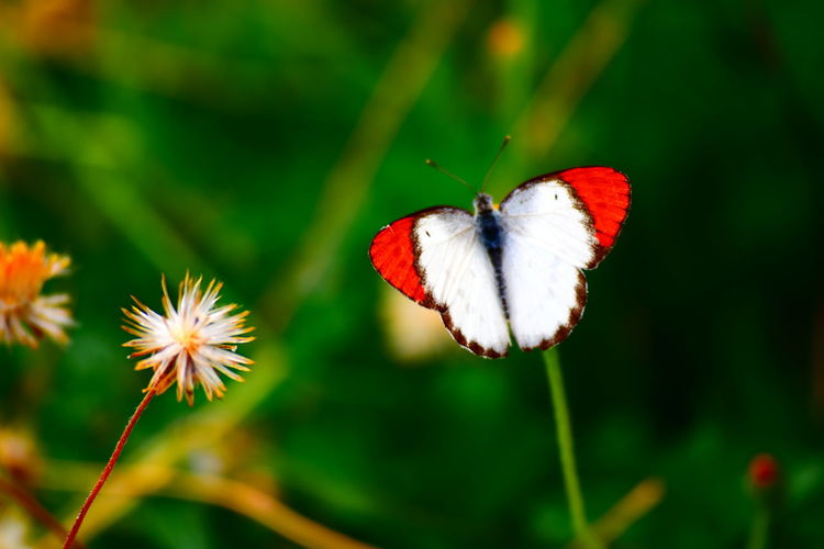 Animal Themes Beauty In Nature Butterfly Butterfly Collection Close-up Flower Insect Nature Outdoors