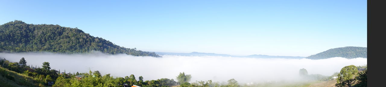 PANORAMIC VIEW OF TREES AGAINST CLEAR SKY