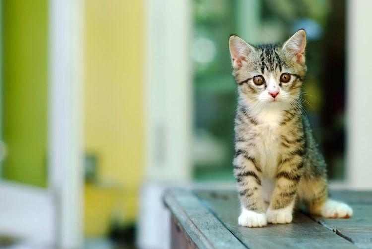 Portrait Of Kitten Sitting On Table