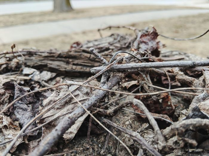 EyeEm Selects Beach Water Sand Close-up Dead Plant Dead Tree Dried Plant Bare Tree Thistle Twig Dry Dried Fallen Tree Wilted Anise