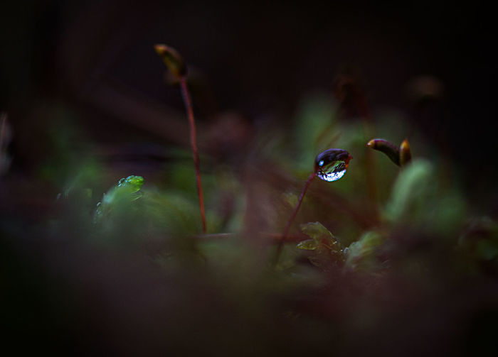 Backgrounds Beauty In Nature Close-up Day Dew Drops Drops Forest Fragility Growth Latvia Light And Shadow Mistic Morning Light Nature No People Photo Wallpapers Plant Plants Rain Secret WoodLand The Great Outdoors - 2017 EyeEm Awards