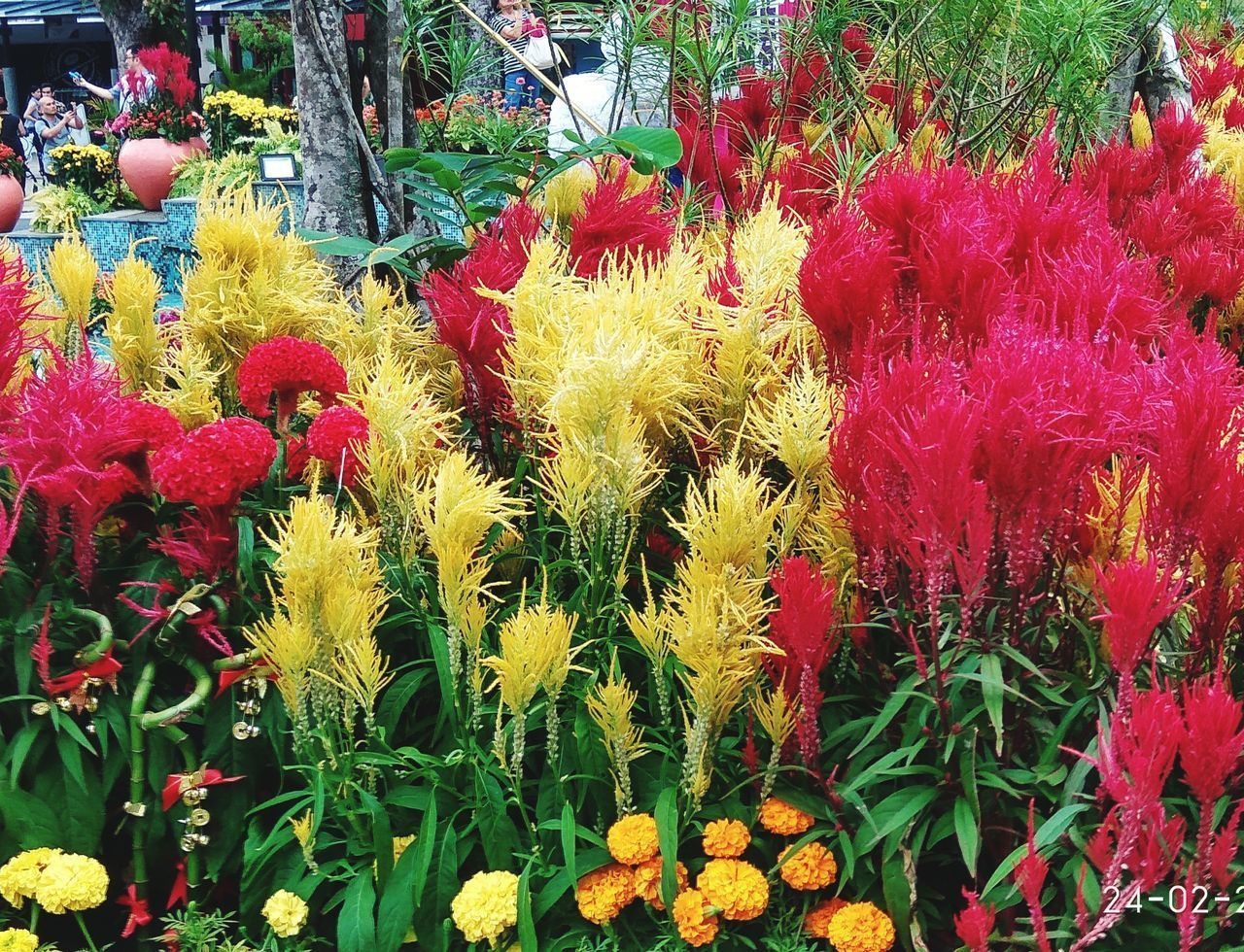 flower, flowering plant, plant, freshness, vulnerability, growth, beauty in nature, fragility, multi colored, flower head, variation, choice, yellow, day, inflorescence, no people, close-up, nature, red, petal, outdoors, springtime, flower arrangement, bouquet