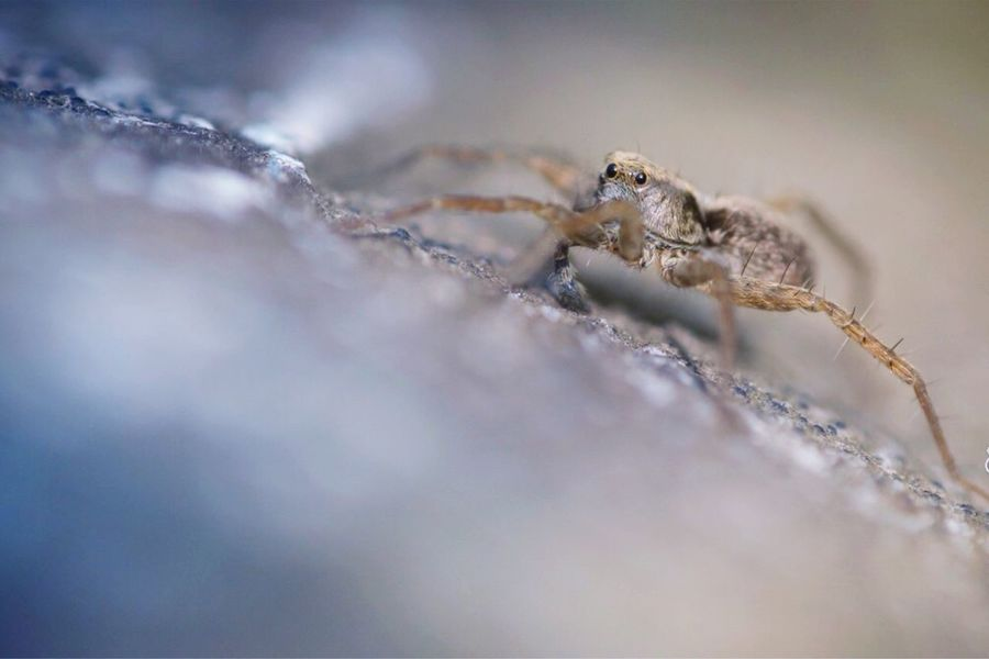 Cute spider Check This Out Nature_collection EyeEm Nature Lover Eye4photography  Nature Spider Popular Photos Macro Photography Macro_collection The Week On EyeEm
