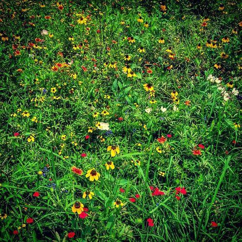 Hermannpark Houston Urban Texas Wildflowers Nature Spring Bayou HoustonTX