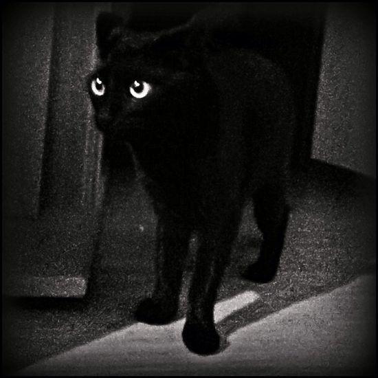 The Dark Side Of The Moon Cat Black Monochrome