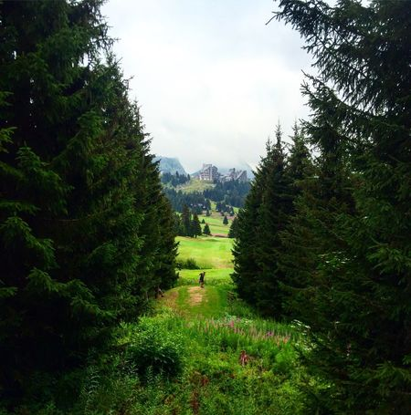 Trees Tree Tranquil Scene Tranquility Landscape Growth Scenics Non-urban Scene Beauty In Nature Green Color Nature Sky Solitude Idyllic Green Day Outdoors Lush Foliage Remote Tourism Freshness Golf Avoriaz