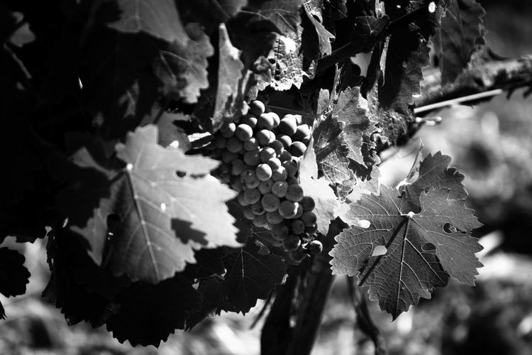 """Winery """"Tenuta"""