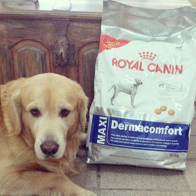 Brenno Augustus cuidando da sua nova alimentação ROYAL CANIN MAXI DERMACOMFORT. HoundDog Botiquecanina