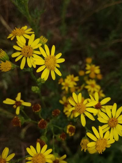 Beauty In Nature Day Flower Freshness Nature No People Outdoors Yellow