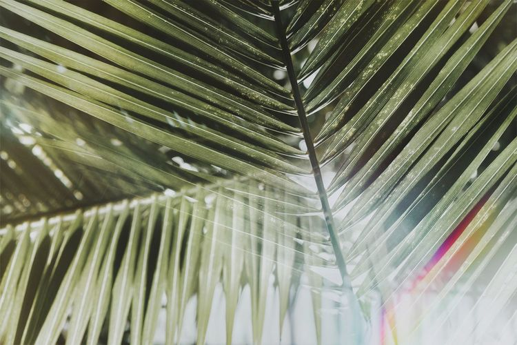 Juxtaposition Spectrum Green Green Color Growth Leaves Abstract Abstract Backgrounds Backgrounds Full Frame Leaf Close-up Frond Palm Leaf Tropical Tree Tropical Climate Leaf Vein Textured  Natural Pattern Pattern Growing Plant Life