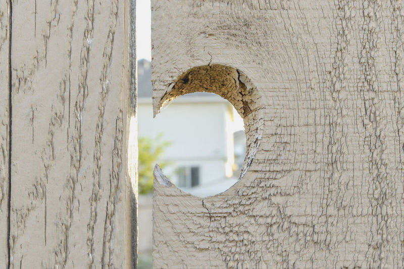 No People Wood - Material Textured  Architecture Close-up Outdoors Trunk Tree Trunk Day Hole Gardening Fance Wooden Wooden Texture Wooden Fence Material Textured  Background My Best Photo