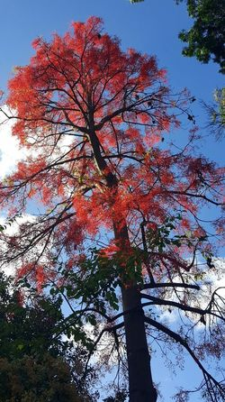 Tree Low Angle View Growth Nature Outdoors Day Forrest Photography Autumn Branch No People Sky Beauty In Nature Multi Colored Full Frame Android Photography Australian Photographers AndroidPhotography Flowers,Plants & Garden Low Angle View Tree Nature Red