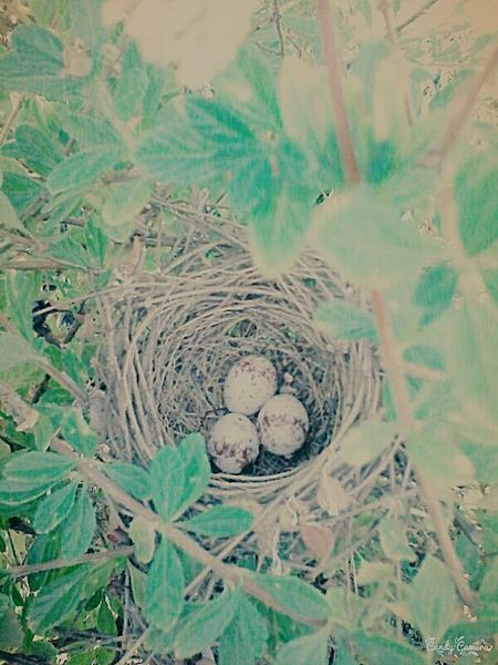 Nature_collection EyeEm Gallery Green Leaves Bird Eggs