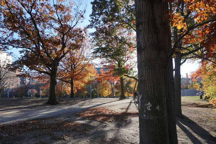 Colorful Trees Beautiful Day Outdoors Photograpghy