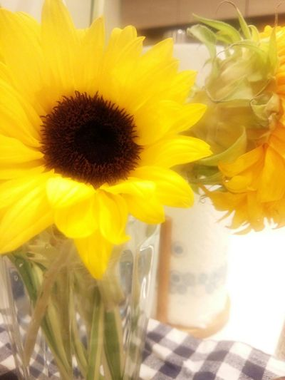 Sunshine in my room. Flowerpower Flower Collection Yellow Flower In My Room