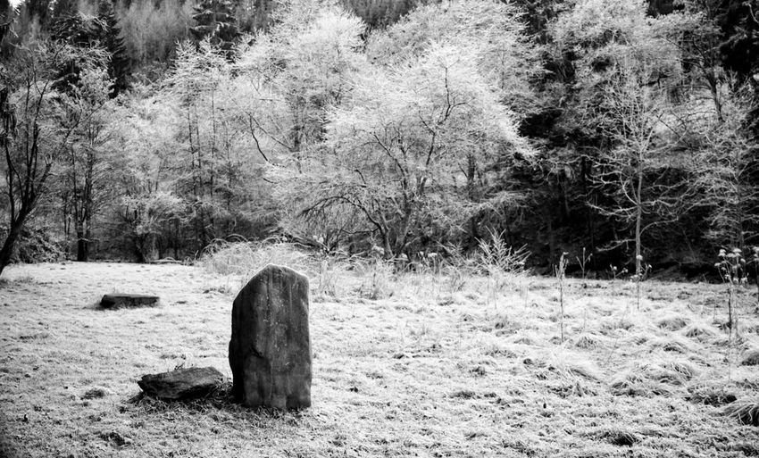Menhir in icy landscape Nature Outdoors No People Tranquil Scene Cold Temperature Forest German Landscape Landscape Trees And Sky Blackandwhite Non-urban Scene