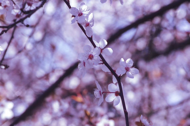 good morning EyeEm friends happy Snappy weekend 👍👍👍😊🤗🧙‍♂️🕊🌊🌸🌸🌸 EyeEm Best Shots EyeEm Nature Lover EyeEmBestPics EyeEm Best Shots - Nature Beauty In Nature Wonders Of Nature Flower Head Tree Flower Branch Springtime Pink Color Beauty Petal Blossom Flower Tree Fruit Tree Pollen In Bloom Stamen Pistil