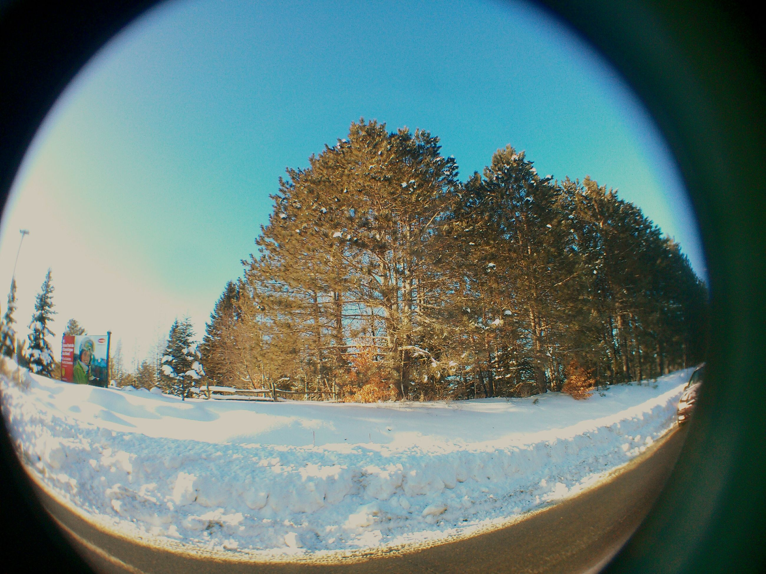 snow, winter, cold temperature, season, tree, transportation, weather, car, road, sky, glass - material, covering, window, land vehicle, nature, frozen, mode of transport, landscape, transparent, street