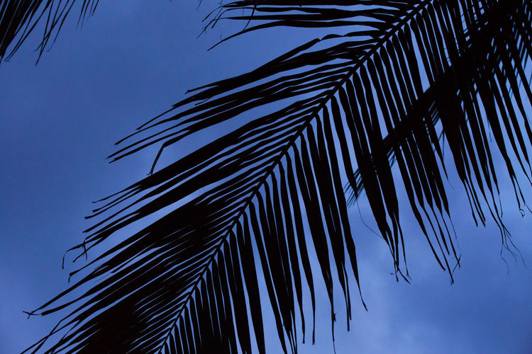 Beach Life Blu Beauty In Nature Blue Nature Palm Tree Peaceful Plant Sky Tranquility Tree Tropical Climate
