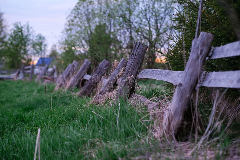 Plant Tree Land Nature Field Grass No People Day Wood - Material Focus On Foreground Growth Selective Focus Tranquility Close-up Green Color Outdoors Sky Environment Wood Log Bark