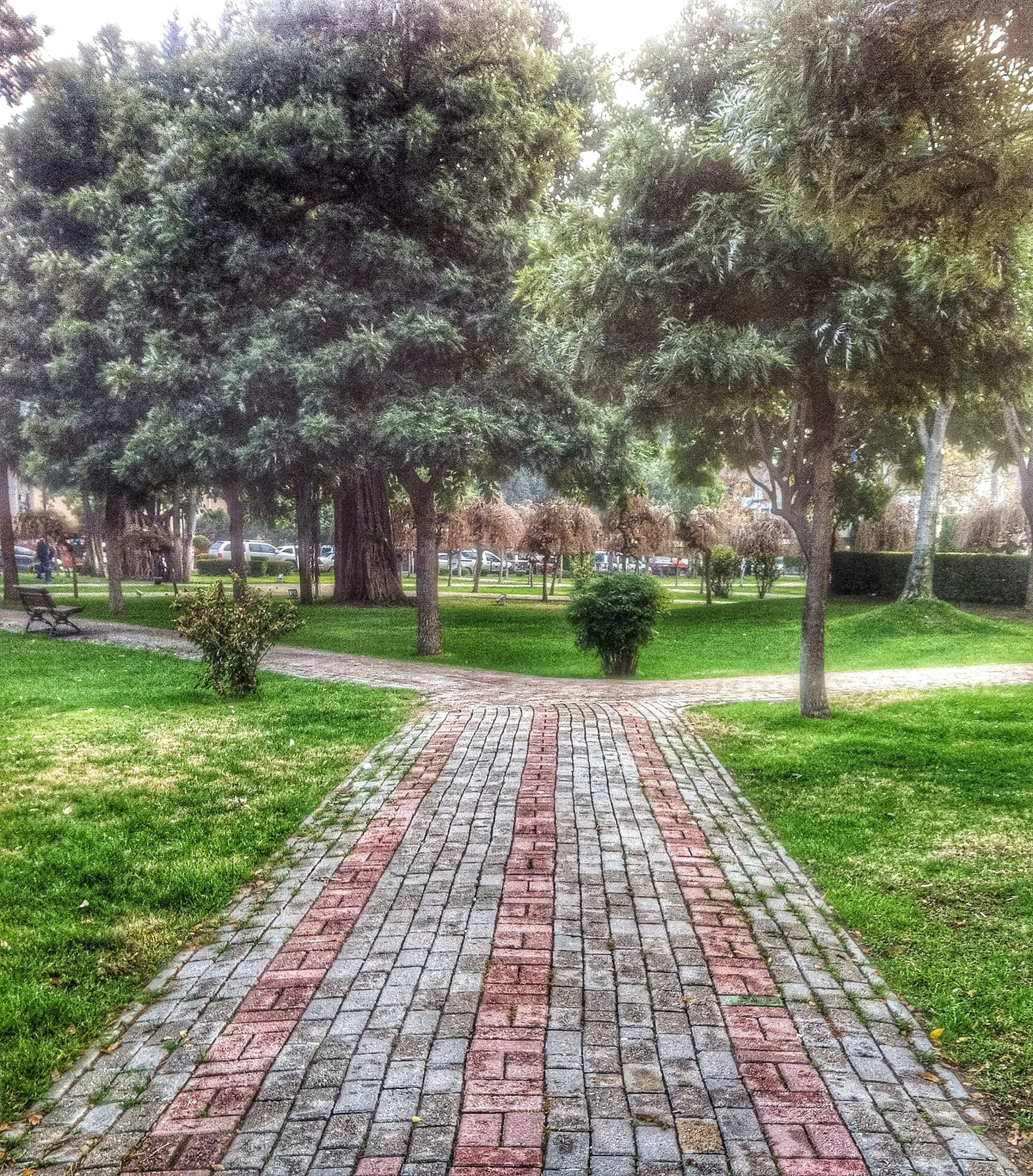 tree, grass, the way forward, footpath, diminishing perspective, green color, growth, park - man made space, tranquility, vanishing point, nature, walkway, field, tranquil scene, pathway, grassy, park, treelined, empty, tree trunk