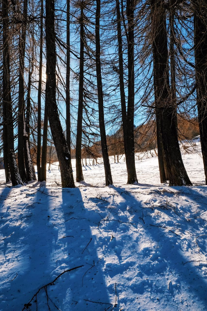 winter, snow, cold temperature, nature, tree, tranquility, beauty in nature, scenics, tranquil scene, day, no people, outdoors, tree trunk, blue, landscape, sky