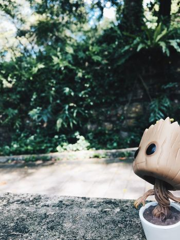Groot Day No People Outdoors Tree Nature Close-up Sculpture Groot Funkopopvinyl Singapore EyeEmNewHere