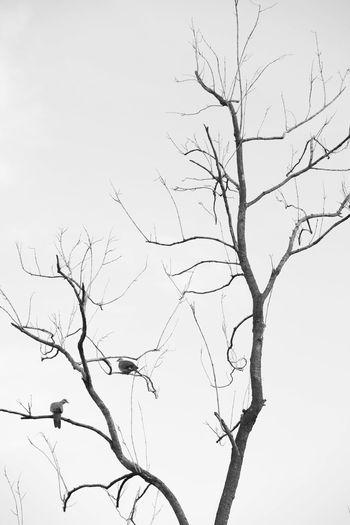 Birds Bird Bird Photography Bird On A Tree Bird On The Tree Black And White Black And White Photography Black And White Tree Tree Photography