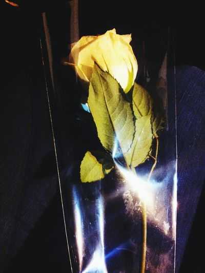 Rose♥ Near And