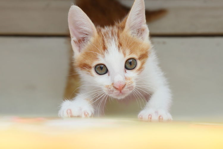 Close-up portrait of young kitten looking up to camera