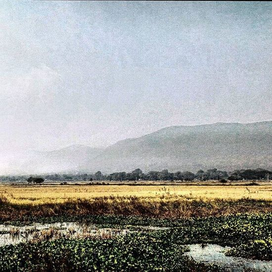 The Indian Countryside Full of Surprise Full of Variety You just Cantgetenough Picturesque Serene Tranquil Peace Calm Scenic Scenery_lovers Scenery Beautifulscenery Camerateur Indiatravelgram Ig_india Incredibleindia Ig_odisha Sobhubaneswar