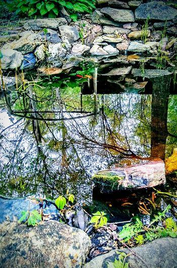 zenitation Nature Beauty Relax Water Life Reincarnation Zen Rieki Meditation