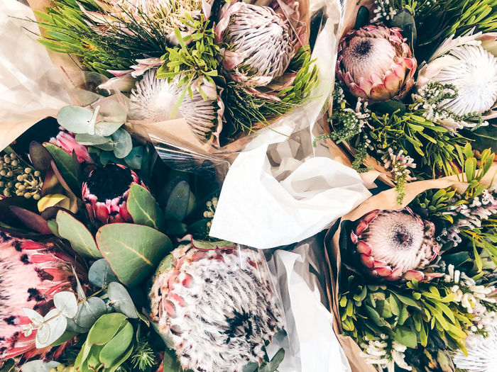 High angle view of protea flower bouquet
