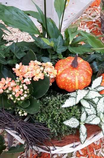 Blumenkorb für den Herbst Blumenkorb