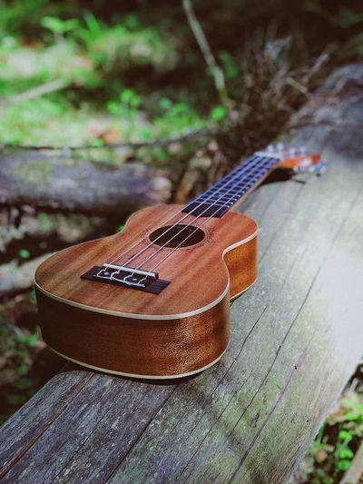 Ukulele Wild Forest Focus On Foreground String Instrument Guitar Close-up Day Music Arts Culture And Entertainment Acoustic Guitar Wood - Material Land Outdoors Musical Instrument String Selective Focus Plant Musical Equipment String High Angle View No People Musical Instrument Nature