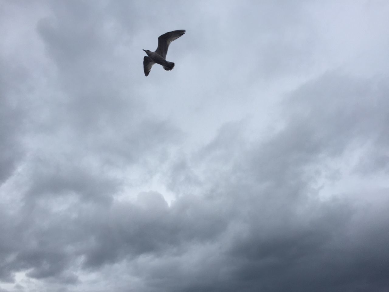 flying, low angle view, animals in the wild, cloud - sky, spread wings, sky, bird, one animal, animal themes, no people, day, mid-air, animal wildlife, nature, outdoors, airplane, beauty in nature