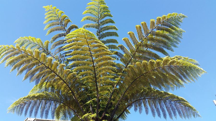 Low Angle View Of Fern Against Sky