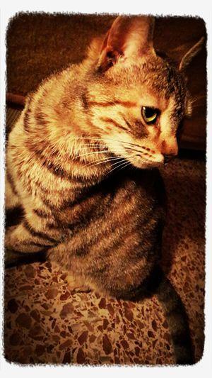 Sweet Pets Enjoying Life Cat♡ Pet Photography  bana öyle bakma panpa utanıyorum :) ^••^
