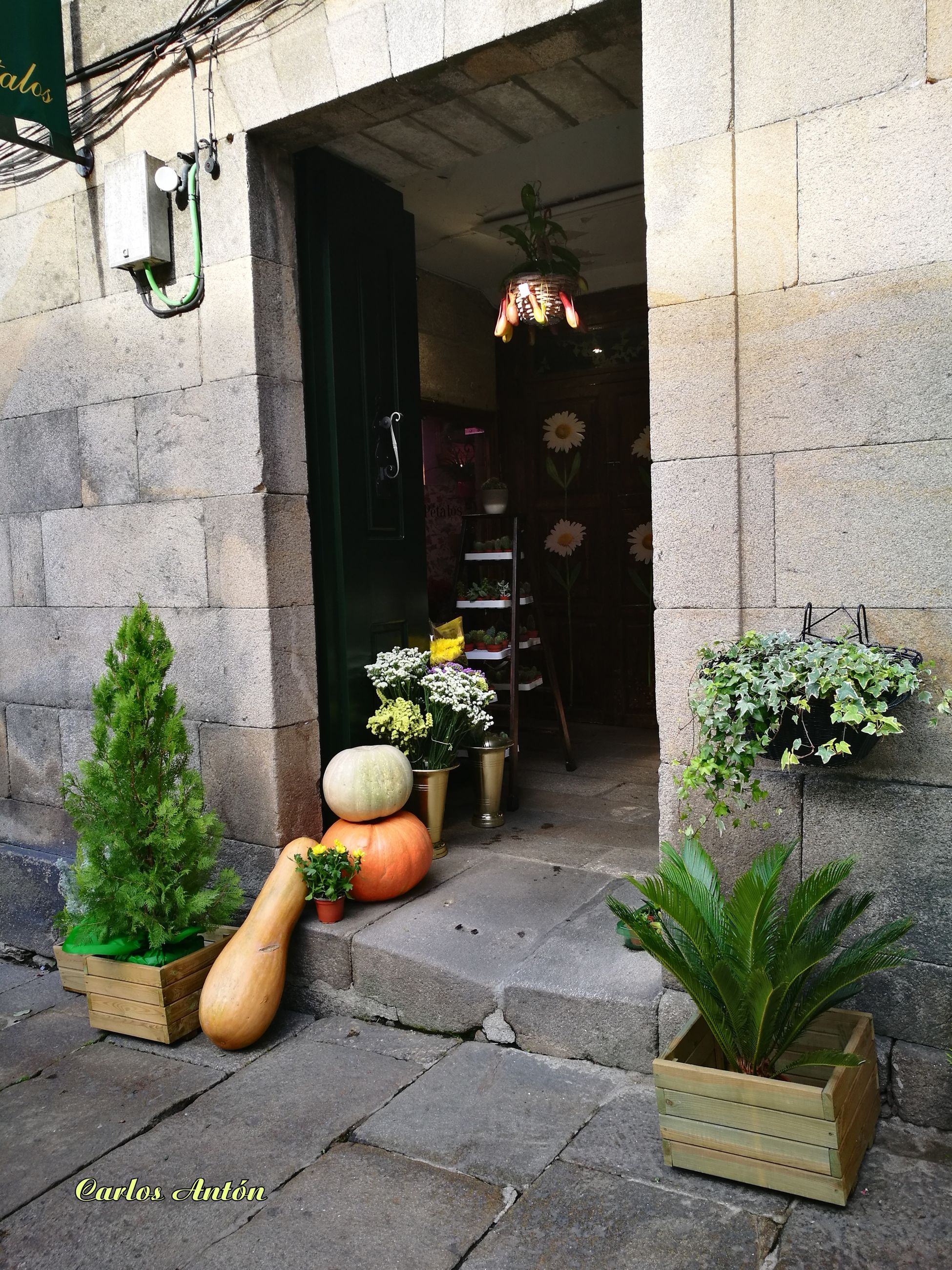 potted plant, plant, flower, growth, architecture, built structure, building exterior, no people, outdoors, day, freshness