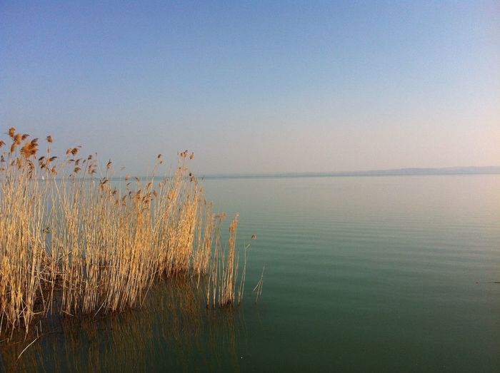Blue Nature Reed Sky Water