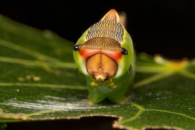 Close-up of caterpillar on damaged leaf