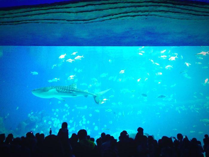 Sea Oceanpark Changlong Fish