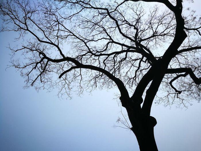tree,sky,blue,no