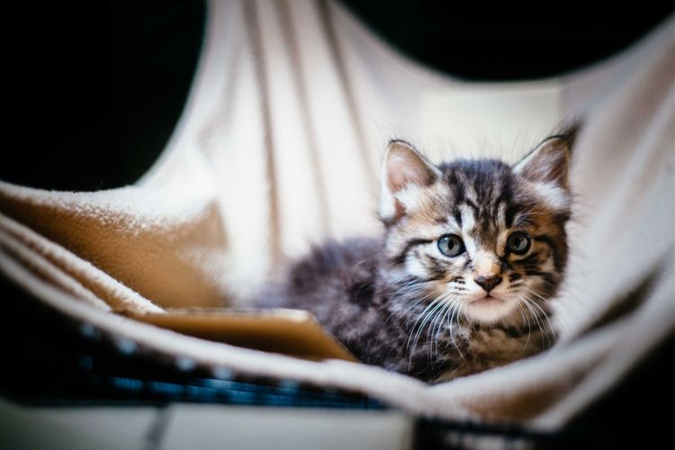 Portrait of kitten at home