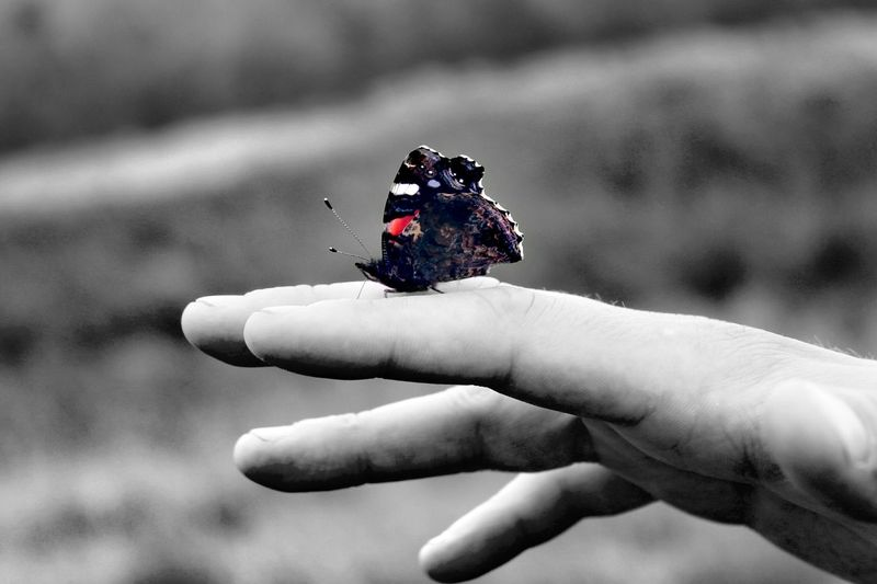 Human Hand Human Body Part One Person Outdoors Day One Animal Close-up Animal Themes Butterfly Insect Insect Photography Black And White