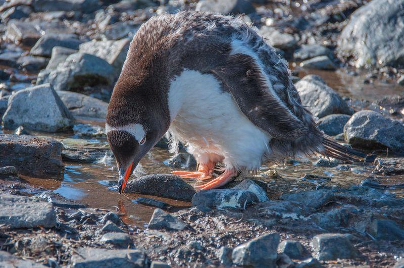 Close-up of bird on rock at shore