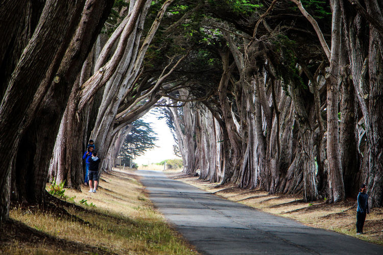 Activity Adult Cypress Tree Tunnel Cypress Trees  Day Direction Footpath Full Length Nature Outdoors People Plant Real People Rear View Road The Way Forward Transportation Tree Tree Trunk Treelined Trunk Walking Women