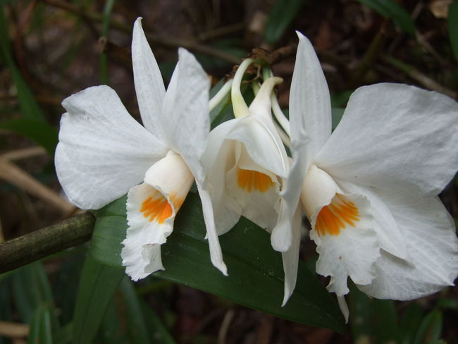 Beauty In Nature Blooming Flower Growth No People Orchids Plant White Color