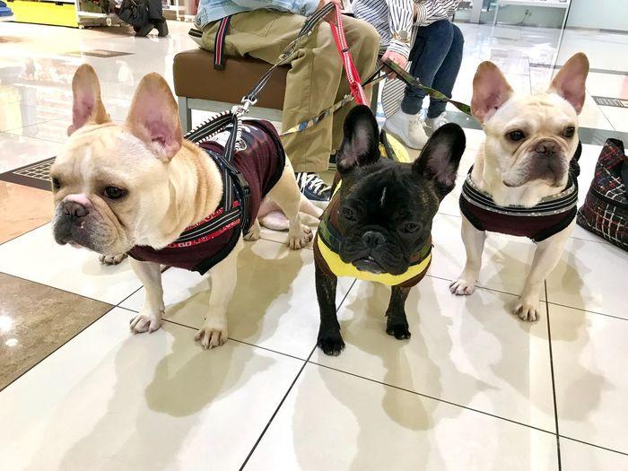 Pets Domestic Animal Themes Canine Mammal Animal Dog